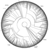 phylogenetic_tree_2